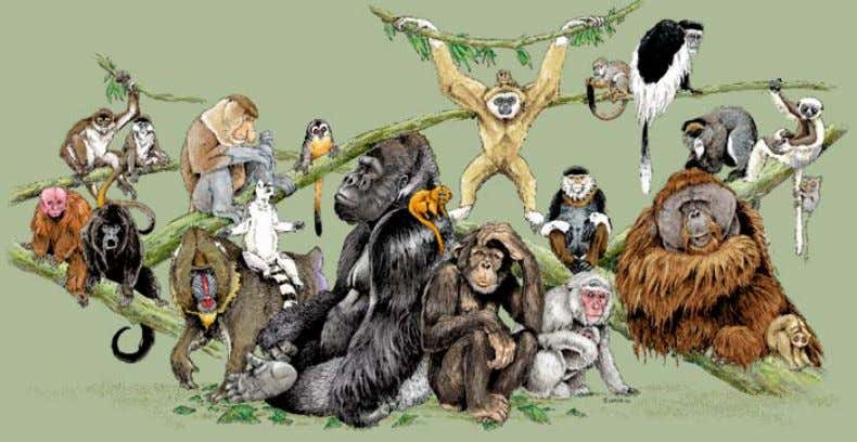 New World. Monkeys, though, are native in South America. How could so many apes flourish so