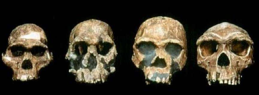 Homo Habilis is the first of the Homo group, at 2.5 mya. However, it is