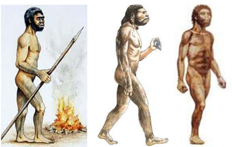 "See how these bodies lack pelts? If you Google Australopithecine ""images,"" you'll find most of"