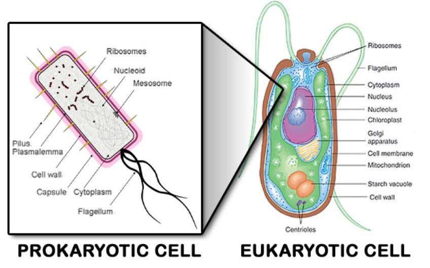green dots seen in the eukaryote in the illustration below. Given so many significant differences, how