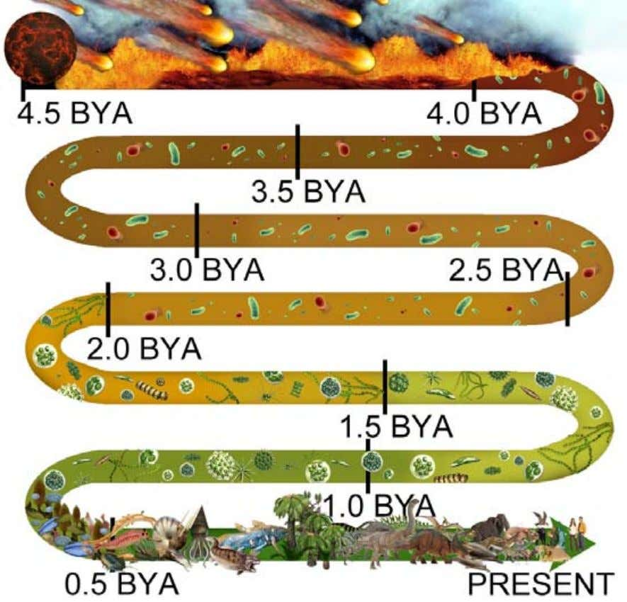 forms of life that came after the Cambrian explosion. From coalescing at 4.5 bya, the EHB