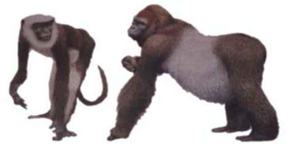 start of the Miocene, when the firs t tailless apes appear. With each of these creat