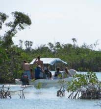 tourist development at Mahahual. ECOSUR research station. Birdwatching in the mangroves, Laguna Guerrero. Ant - plant