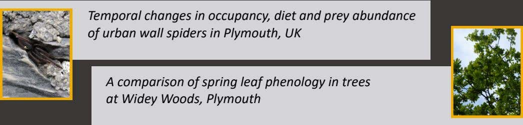 Temporal changes in occupancy, diet and prey abundance of urban wall spiders in Plymouth, UK