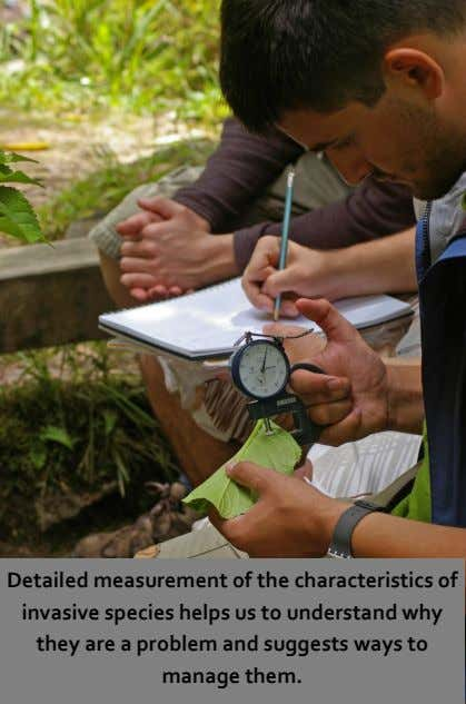 Detailed measurement of the characteristics of invasive species helps us to understand why they are