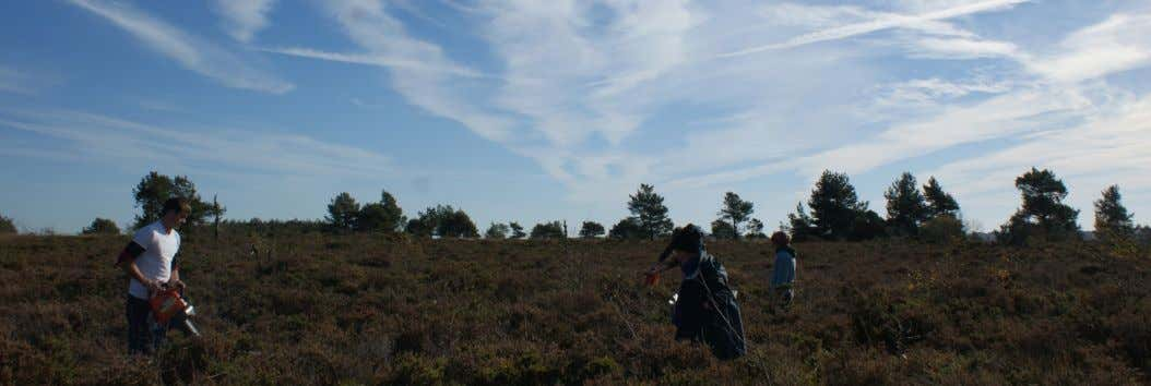 that our graduates are well - trained and worth employing. Lowland heaths have high conservation value