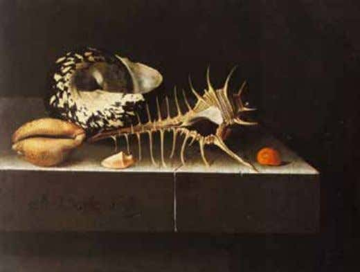 Fig. 4 Adriaen Coorte, Still Life with Shells , 1698, oil on paper, 17.2 x