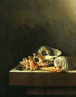 States, Private Collection (artwork in the public domain) Fig. 5 Adriaen Coorte, Still Life with Shells