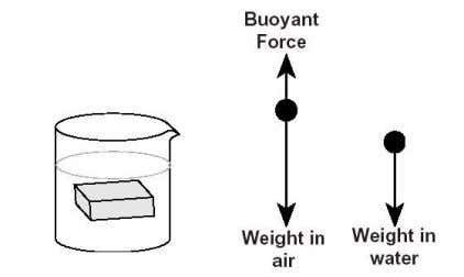 Archimedes' Principle EX-9909 Page 3 of 4 Part II: Finding the Buoyant Force Using Archimedes' Principle