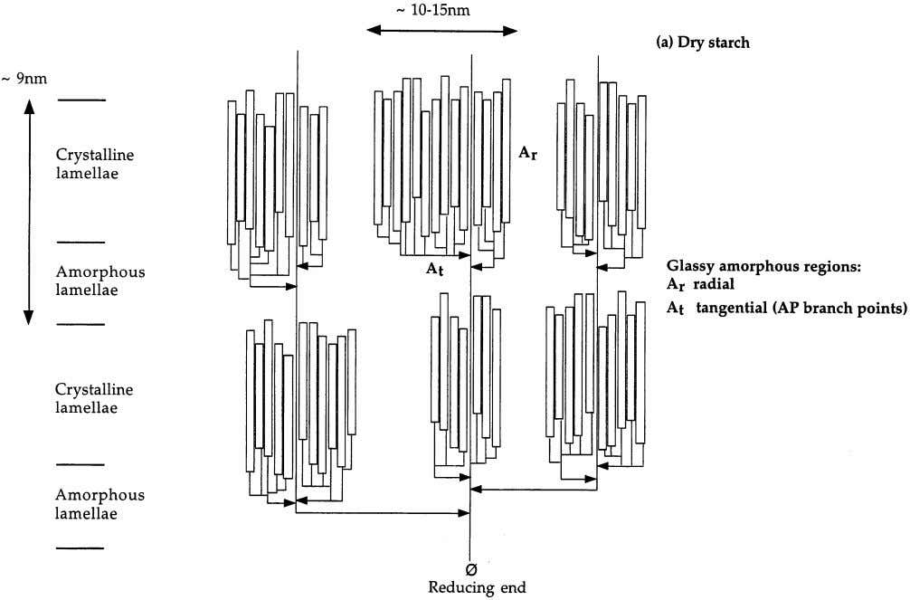 Journal of Biological Macromolecules 27 (2000) 1–12 5 Fig. 3. Pictorial representation of the effect of