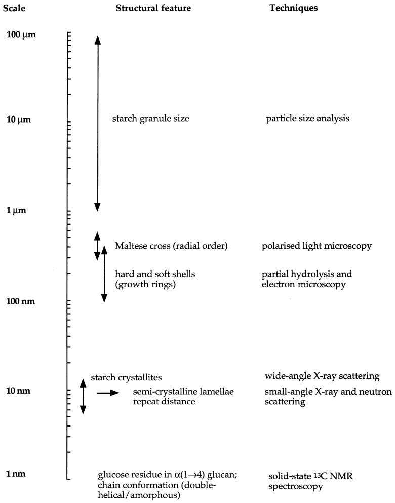 Journal of Biological Macromolecules 27 (2000) 1–12 9 Fig. 5. Pictorial representation of the length scales