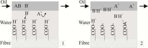 A description of the model shall be attained with Figure 4. Figure 4: Cellulose fibre theory