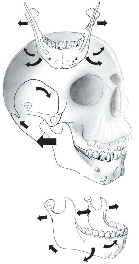 Movement of the facial bones • Figures 66, 67 77