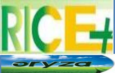 February 27, 2015 Volume 5, Issue I Daily Exclusive ORYZA Rice Newsletter