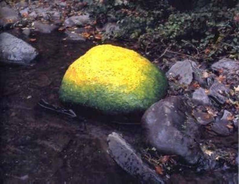 Figura 23 – Leaves laid on a river boulder held with water green to yellow