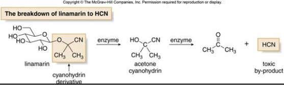 compounds are toxic because they are metabolized to cyanohydrins, which are hydrolyzed to carbonyl compounds and