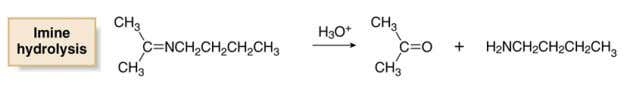 acid. • The mechanism of hydrolysis is the exact reverse of the mechanism written for formation