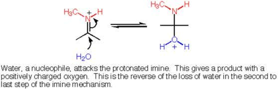 Give the mechanism of Hydrolysis of Imines 30