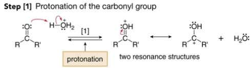 The acid protonates the carbonyl group, making it more electrophilic and thus more susceptible to nucleophilic