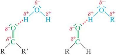 Solubility Lone pair of electrons on oxygen of carbonyl can accept a hydrogen bond from O-H