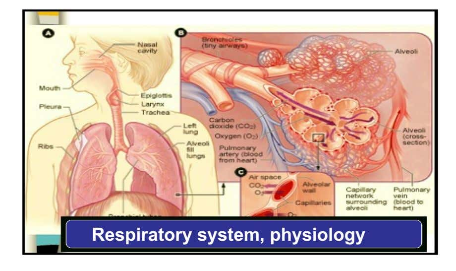 Respiratory system, physiology