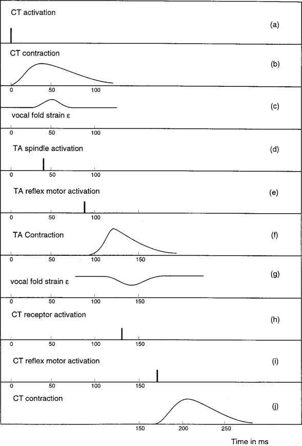 FIG. 2. Time course of efferent and afferent stimuli, and muscle activation. tegration Fig. 2