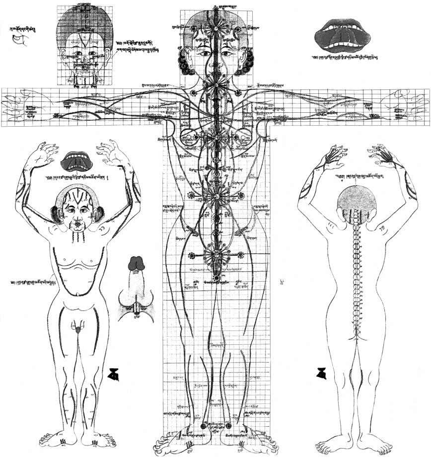 Human Energy Structure PICTURE 3. Figure of chakras from the «Atlas of Tibetan medicine» The gure