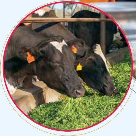 Milk Collection and Dairy Development We continue to focus on the need for greater efficiency