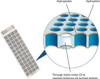 Hydrophobic Hydrophilic Through-holes retain 33 nL reaction mixtures via surface tension
