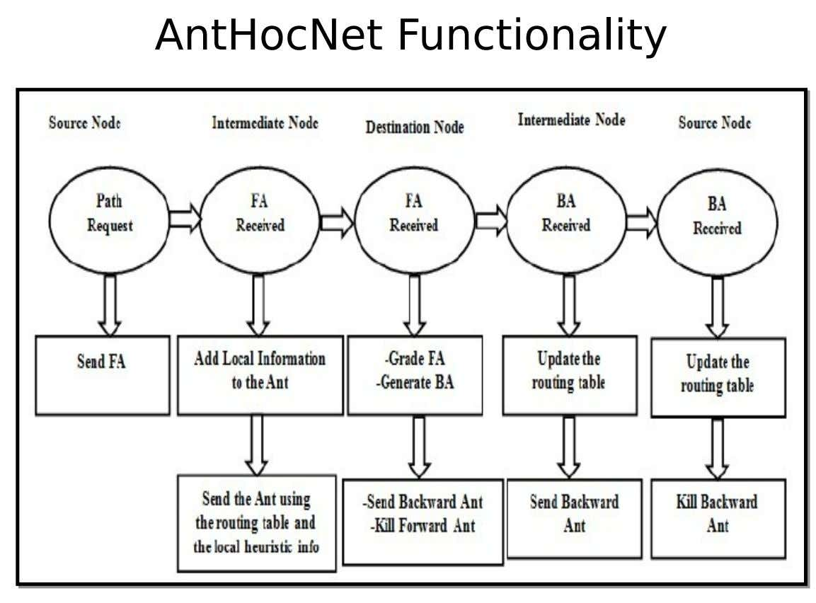 AntHocNet Functionality