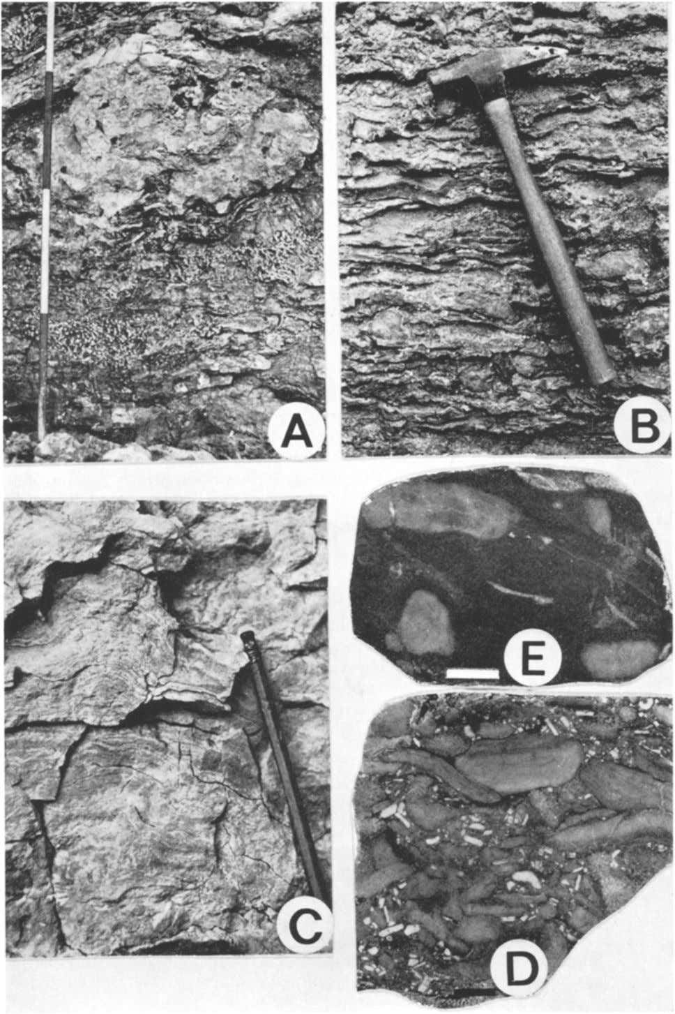 A. F. EMBRY, J, E. KLOVAN -- Absolute Water Depth Limits of Late Devonian Fig. 7