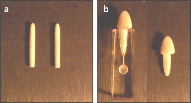 et al. / Journal of Dentistry 43 (2015) 1308 – 1315 Fig.1. (a) Extruded fi bres