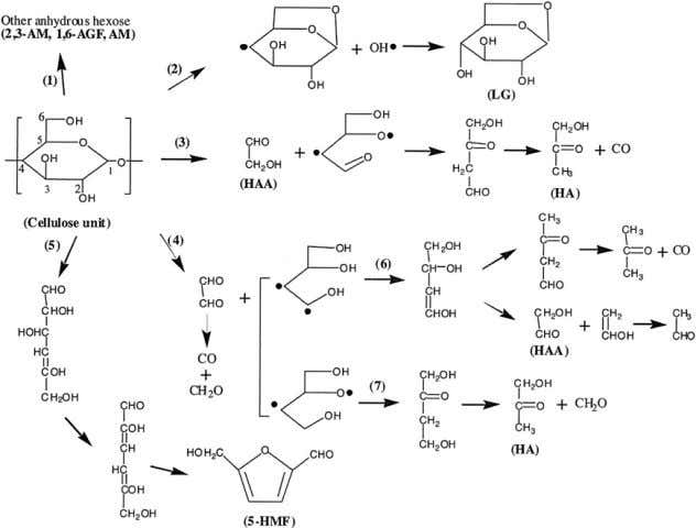 acetal reaction on C-2 and C-5. Regardless the origin of Fig. 8. The chemical pathways for