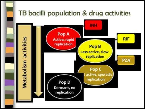 TB bacilli population & drug activities INH Pop A Active, rapid RIF replication Pop B