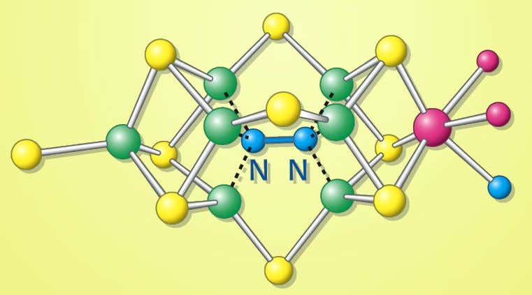 1.1 The Nitrogenase (MoFe Protein) An Iron-Molybdenum cofactor for the nitrogenase binds and reduces the atmospheric