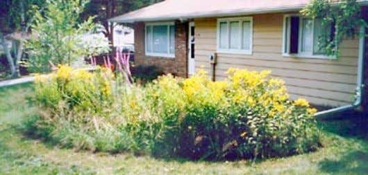 to water capture capacity via evaporation and transpiration. Figure 1 Typical rain garden capturing rooftop runoff