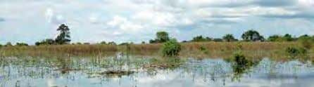 during construction that can compliment the aquatic modes. Flooded farmland and grassy wetlands dominate the landscape
