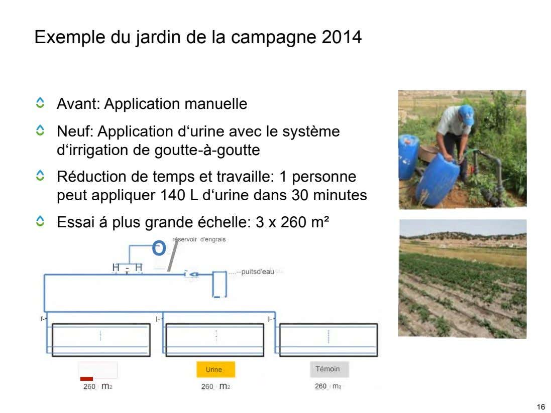 Exemple du jardin de la campagne 2014 Avant: Application manuelle Neuf: Application d'urine avec le