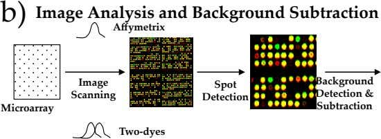 b) Image Analysis and Background Subtraction Affymetrix Image Background Spot Scanning Detection & Detection