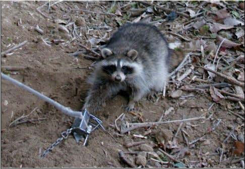 """Coon Dagger: The Dog Proof Trap"" th at fall within the scope of one or more"