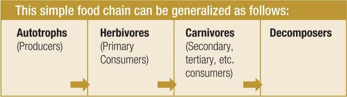 on other carnivores are tertiary (or higher) consumers. The table below gives a simple example of