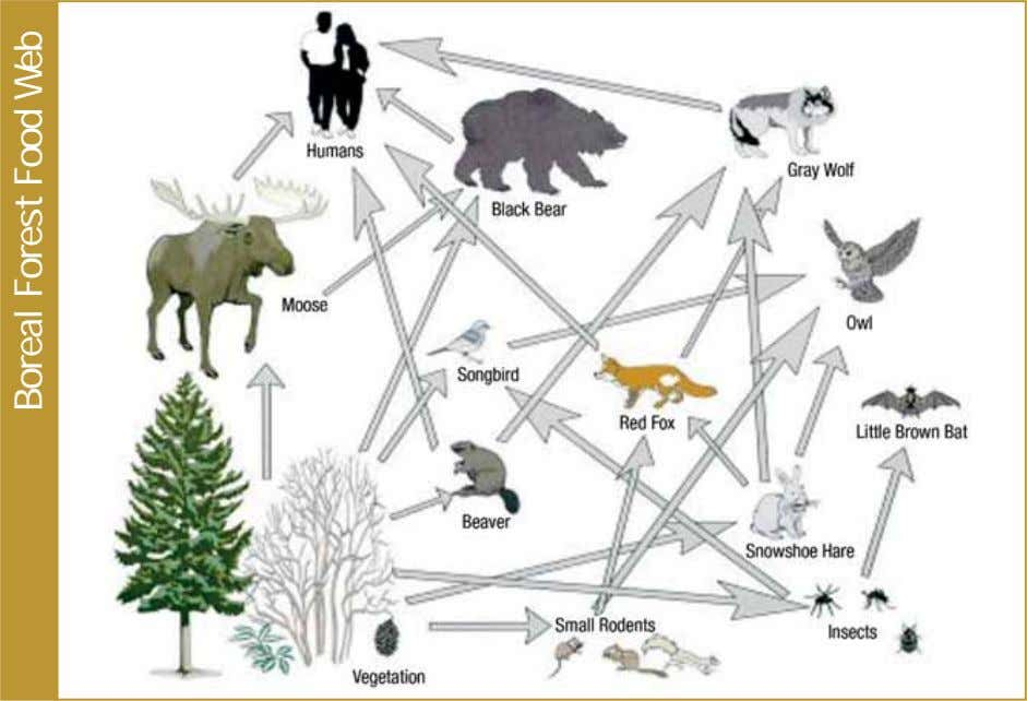 Boreal Forest Food Web