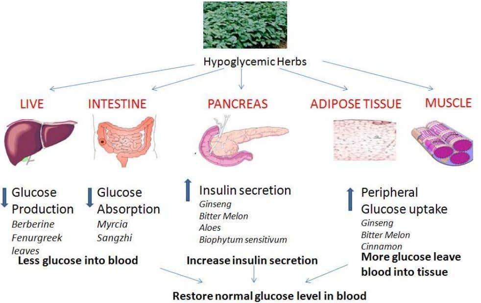 2009, 4 :11 http://www.cmjournal.org/content/4/1/11 Action Figure sites 4 Action sites of herbs in diabetes