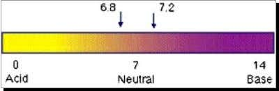7.0 is alkaline, anything below 7.0 is considered acidic. Human blood stays in a very narrow
