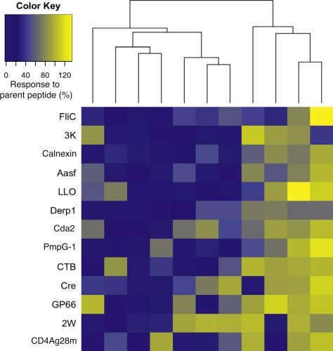 A B Figure 2. Alanine Substitution Analysis of CD4 + T Cell Responses to Known Foreign