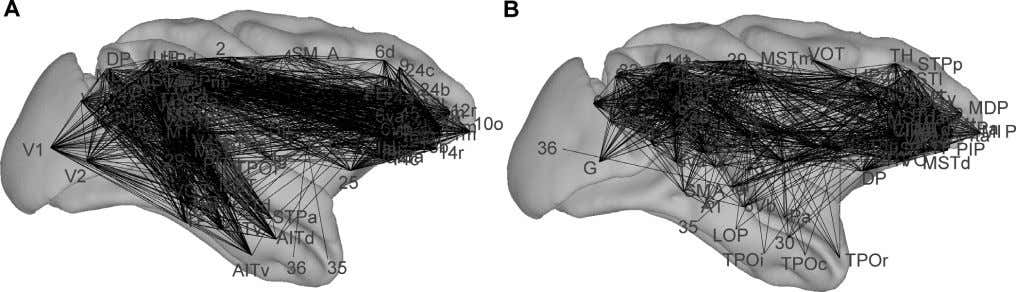 in connection site, of the third spatial coordinate, Figure 2. Original and Optimally Rearranged Macaque