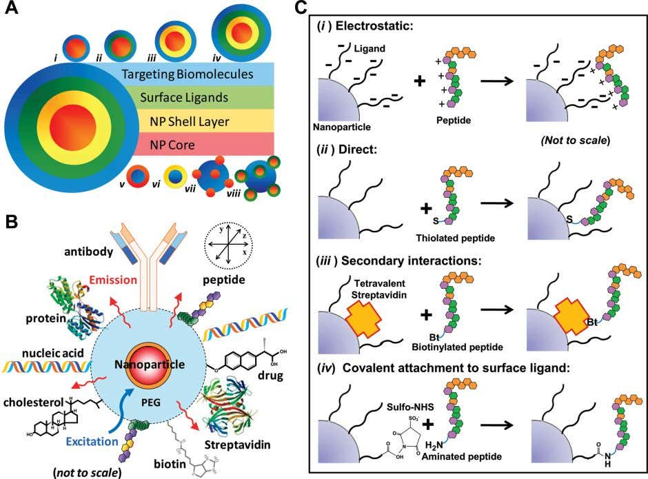 Analytical Chemistry REVIEW Figure 1. NM-bioconjugates: (A) Schematic of the various potential NP-bioconjugate
