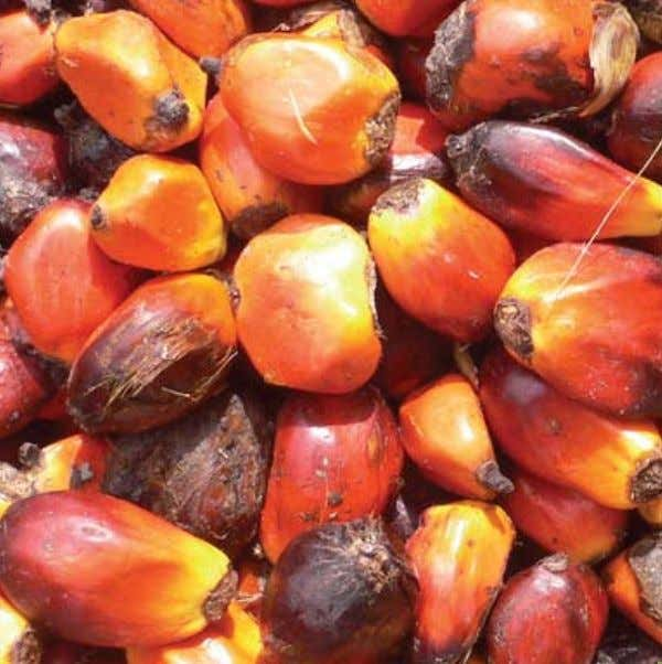 0311 NAANDANJAIN P110911 NaanDanJain is committed to finding the ideal solution for your Oil Palm, tailored