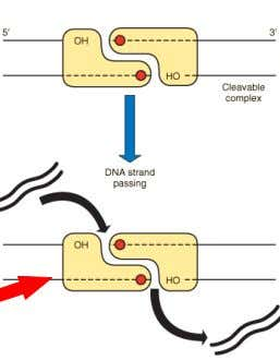 1. Drugs that inhibit DNA gyrase enzymes DNA is made up of To be able to
