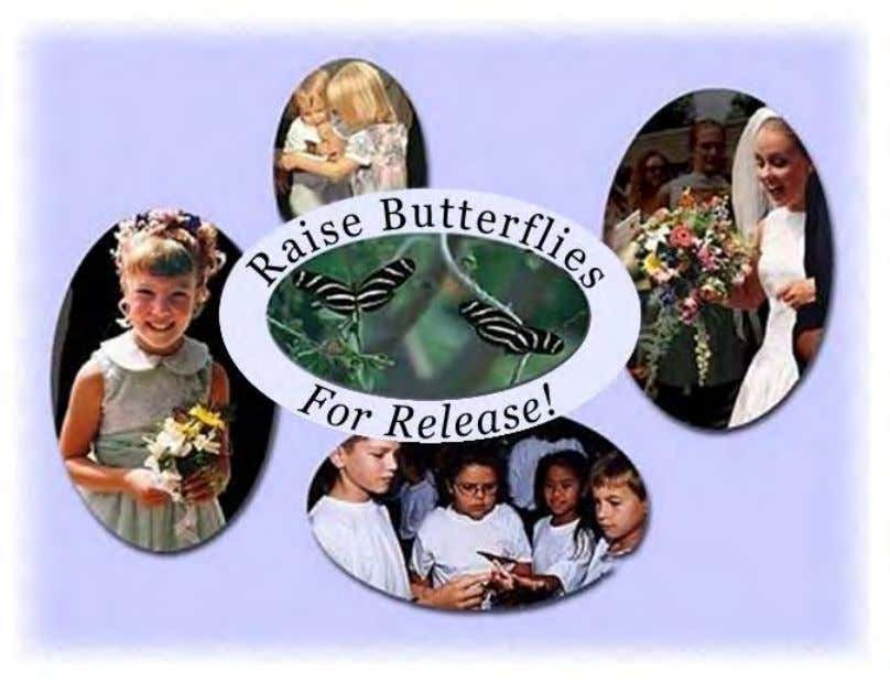 Profitable Businesses Raise Butterflies World-Wide What is Butterfly Farming? Butterfly farmers raise
